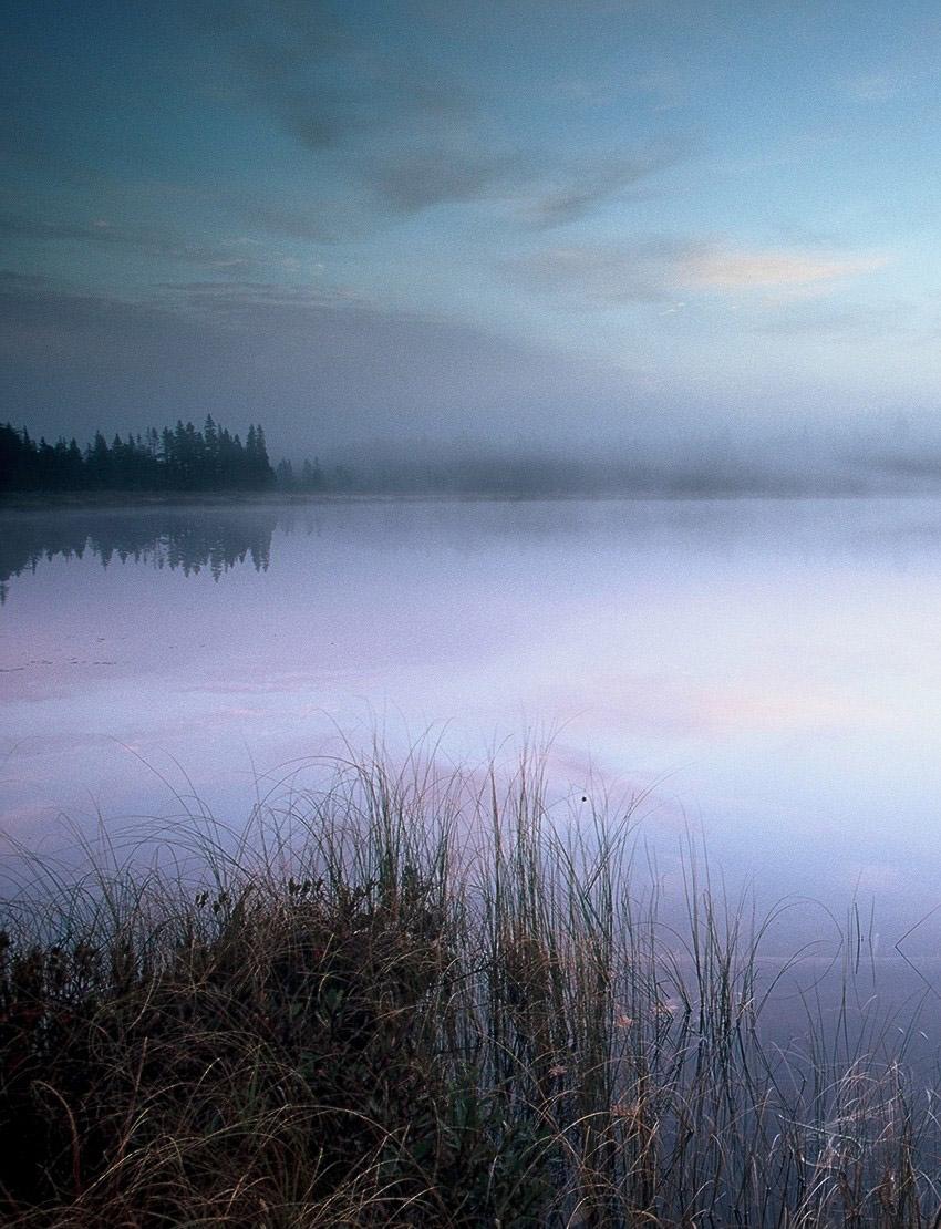 Mist on Lake - Copyright Irwin Barrett