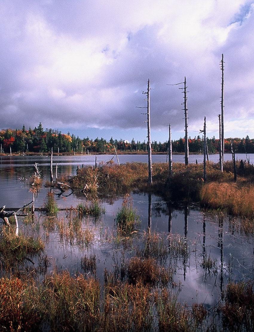 Swamp - Copyright Irwin Barrett